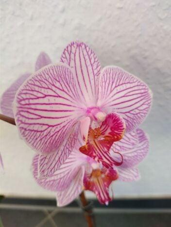 Orchidee im einer makro Aufnahme