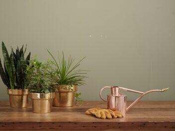 Drei Zimmerpflanzen stehen neben einer Gießkanne auf einem Holztisch