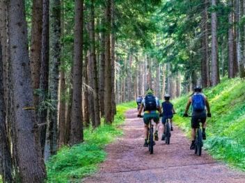 Fünf Radfahrer fahren einen Waldweg auf Mountainbikes entlang