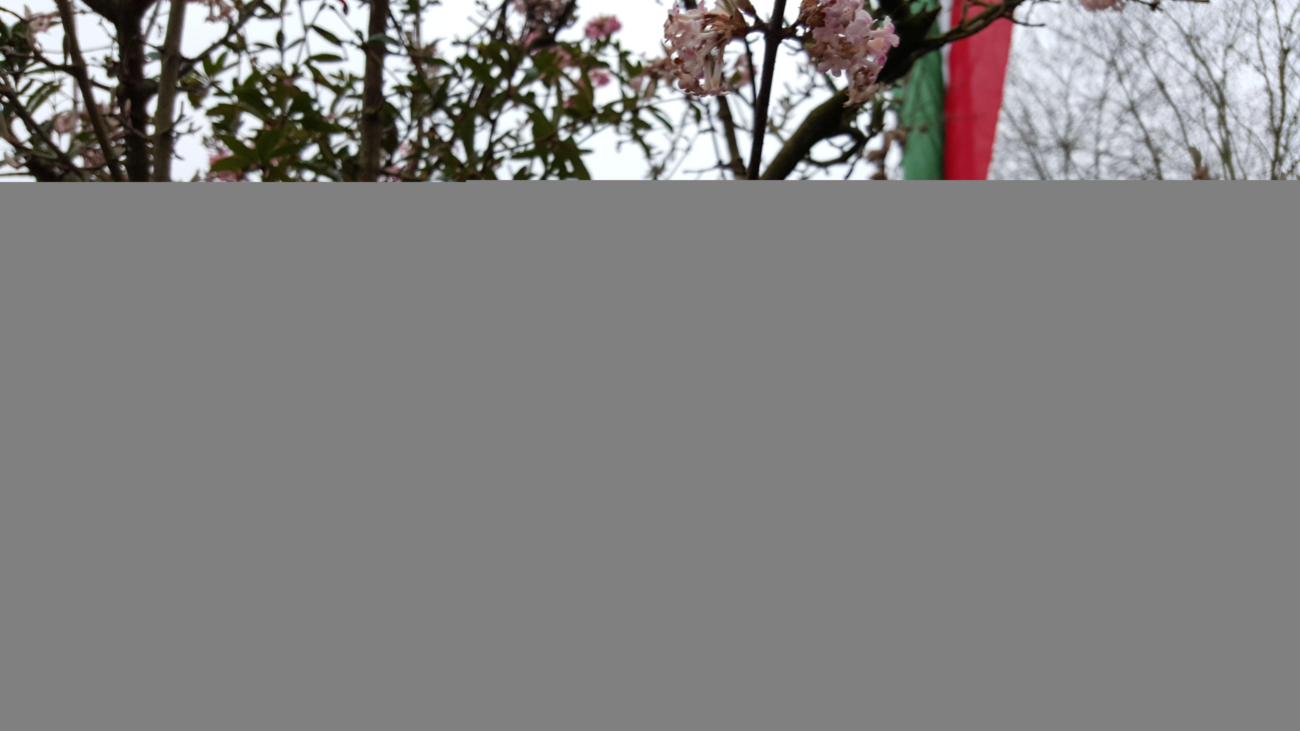 Samsung Galaxy S6 Kamera Foto volle Auflösung