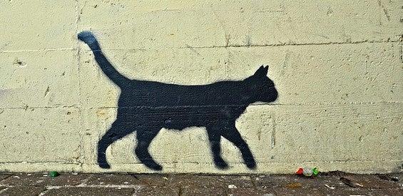 Schwarze Katze Freitag der 13.