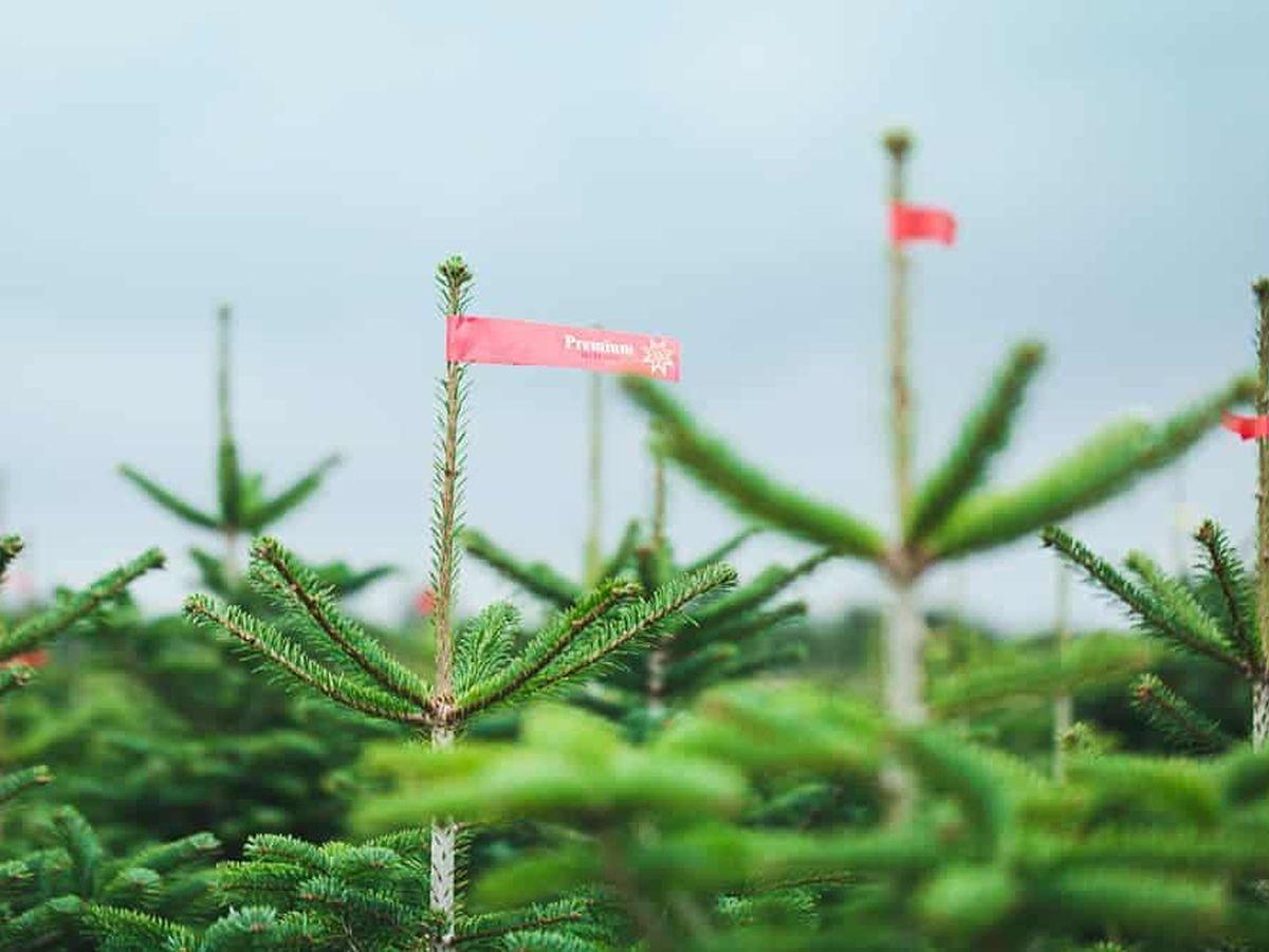 Weihnachtsbaum online kaufen: Hier geht sogar der Tannenbaum ins Netz
