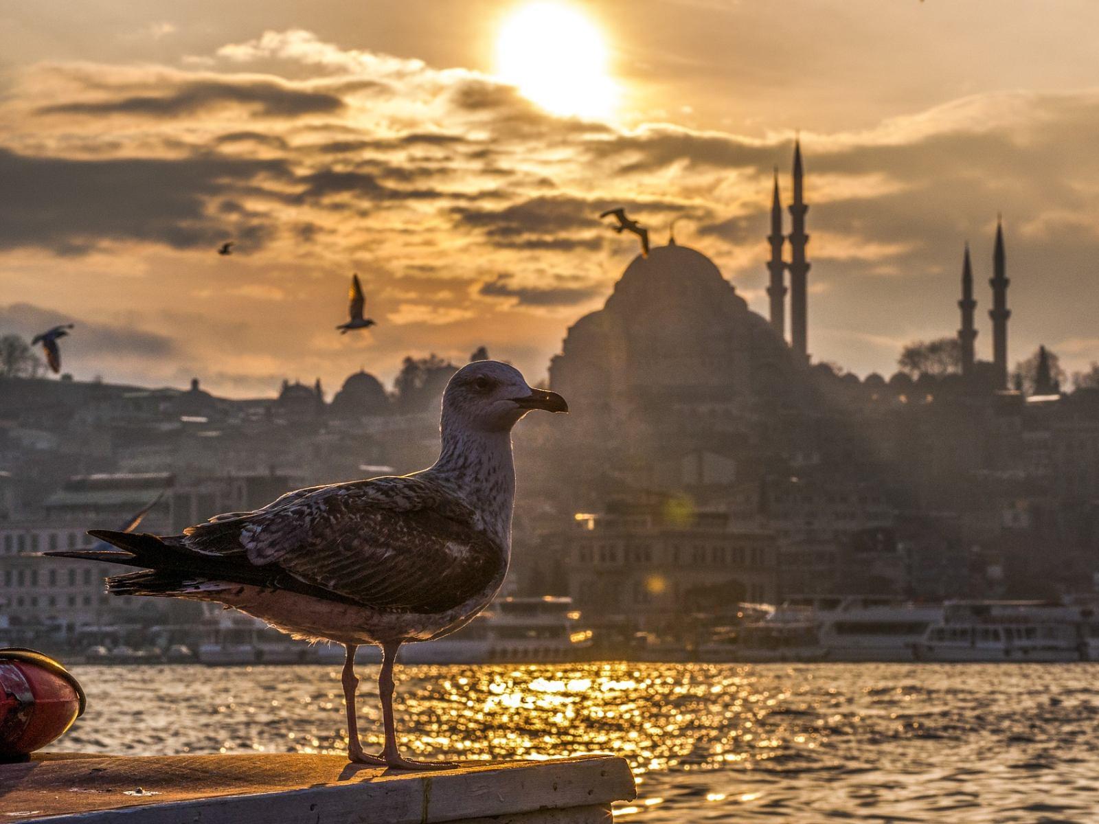 Stimmungsbild: Möwe vor türkischem Minarett