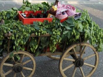 Ein Bollerwagen mit einem Bierkasten und einem Hemd, verziert mit Hopfenpflanzen