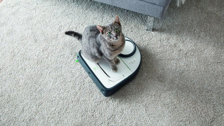 Kobold Saugroboter VR300 mit Katze