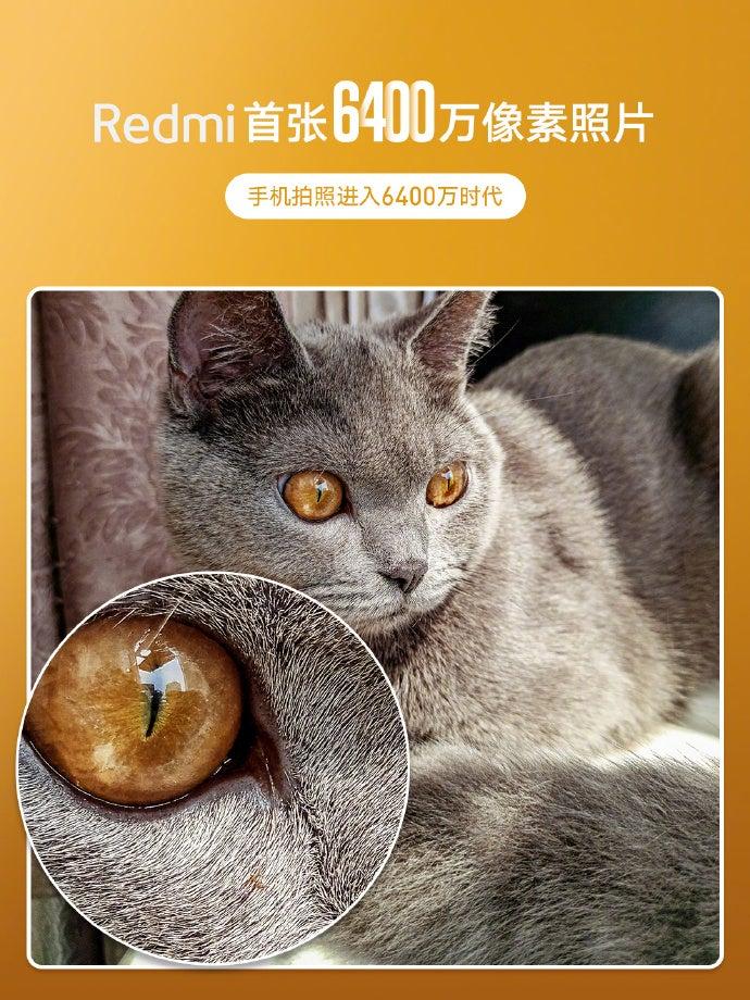 Xiaomi-Ankündigung mit Katze